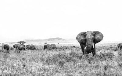 Africa and Soul: Kenya and Tanzania